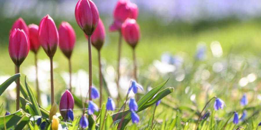 Весна придет по расписанию